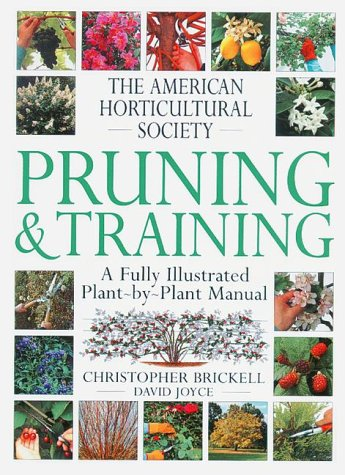 Pruning & Training 9781564583314