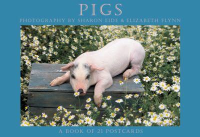 Pigs Postcard Book
