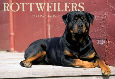 Rottweilers Postcard Book