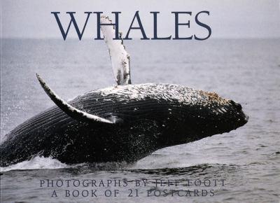 Whales Postcard Book 9781563138010