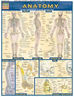 Anatomy Laminate Reference Chart: The Most Comprehensive All-In-One Anatomy Chart 9781572224919