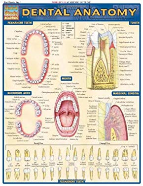 Dental Anatomy 9781572228108