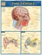The Senses 9781572224995