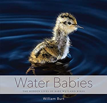 Water Babies : The Hidden Lives of Baby Wetland Birds