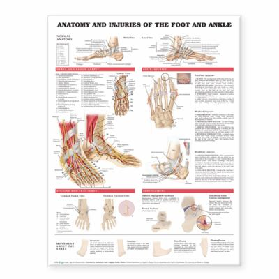 Anatomy and Injuries of the Foot and Ankle 9781587798382