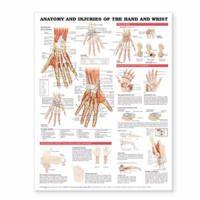 Anatomy and Injuries of the Hand and Wrist Anatomical Chart 9781587799143