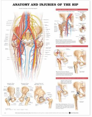 Anatomy and Injuries of the Hip Anatomical Chart 9781587793820