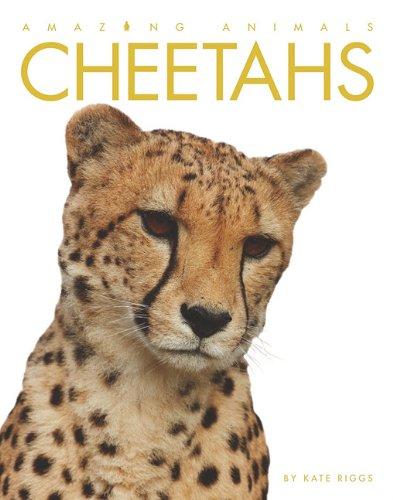 Cheetahs 9781583419885