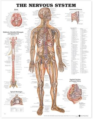 Nervous System 9781587790447