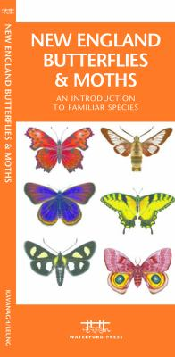 New England Butterflies & Moths: An Introduction to Familiar Species 9781583553619