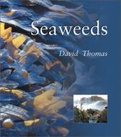 Seaweeds: Seaweeds 7215405