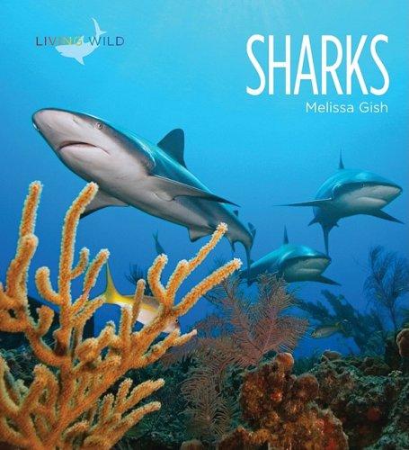 Sharks 9781583417423