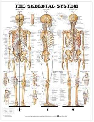 Skeletal System 9781587790621