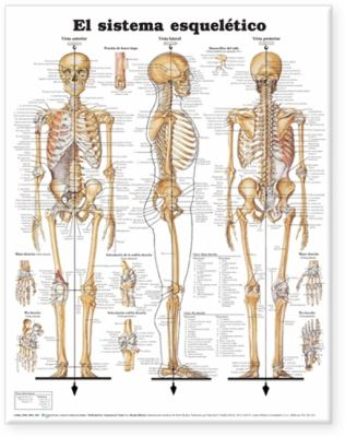 Skeletal System Anatomical Chart in Spanish 9781587799983