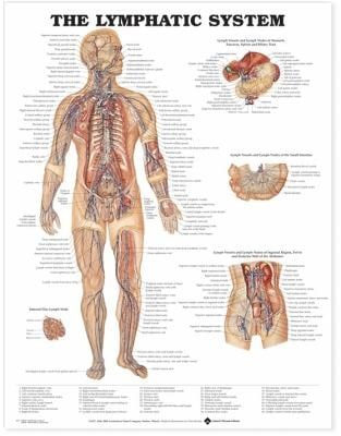 The Lymphatic System Anatomical Chart 9781587790263
