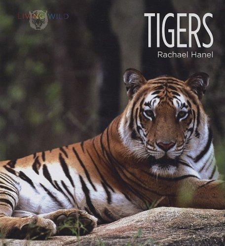 Tigers 9781583416600