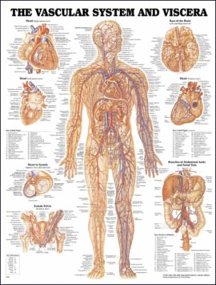 Vascular System and Viscera Anatomical Chart 9781587790768