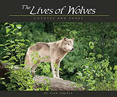 The Lives of Wolves: Coyotes and Foxes 9781591932765