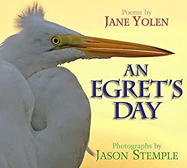 An Egret's Day 9781590786505