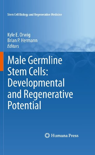 Male Germline Stem Cells: Developmental and Regenerative Potential 9781617379727