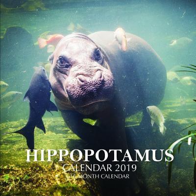 Hippopotamus Calendar 2019: 16 Month Calendar