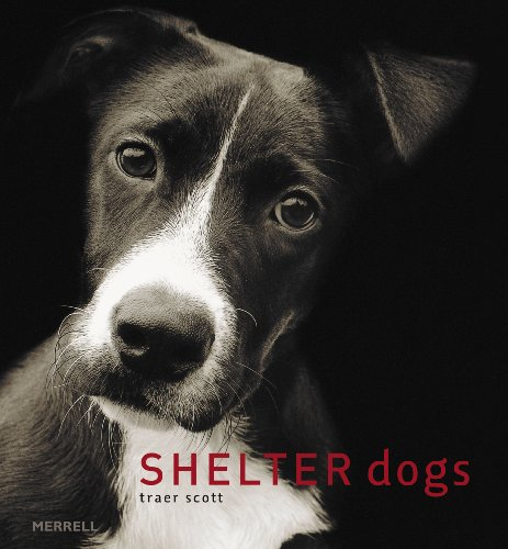 Shelter Dogs 9781858944982
