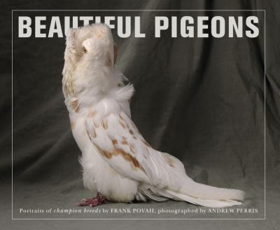 Beautiful Pigeons 9781908005496