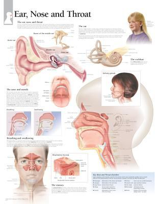 Ear, Nose & Throat Chart: Wall Chart 9781932922684