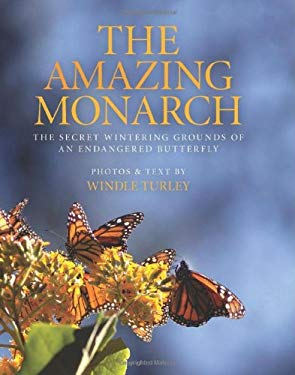 The Amazing Monarch: The Secret Wintering Grounds of an Endangered Butterfly 9781935251941