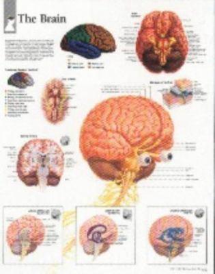 The Brain Chart: Laminated Wall Chart 9781930633278