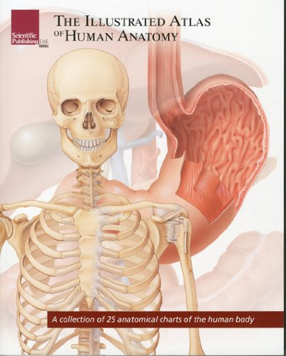 The Illustrated Atlas of Human Anatomy: A Collection of 25 Anatomical Charts of the Human Body 9781932922950