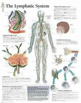 The Lymphatic System Chart: Wall Chart 9781930633902