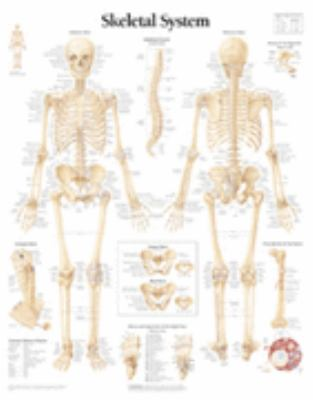 The Skeletal System Chart: Wall Chart 9781930633001