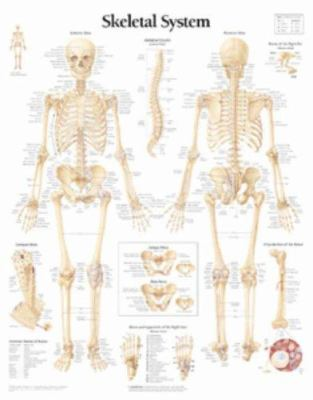 The Skeletal System Chart: Laminated Wall Chart 9781930633018