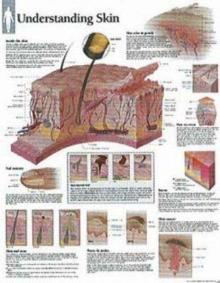 Understanding Skin Chart: Wall Chart 9781930633926
