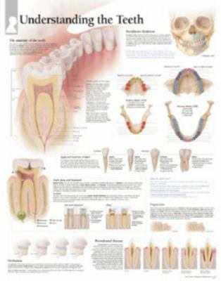 Understanding the Teeth Chart: Wall Chart 9781930633889