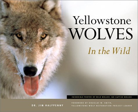 Yellowstone Wolves in the Wild 9781931832267