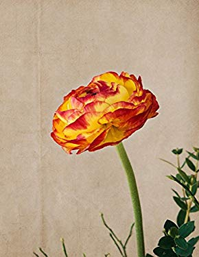 Flower Blossom Notebook: Floral Red Orange Yellow 8.5 X 11 202 College Ruled Pages