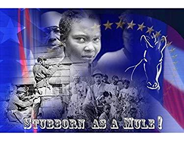 Stubborn As A Mule!
