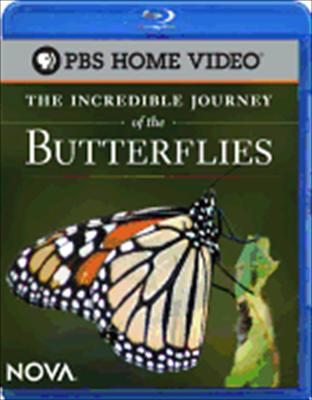 Incredible Journey of the Butterflies