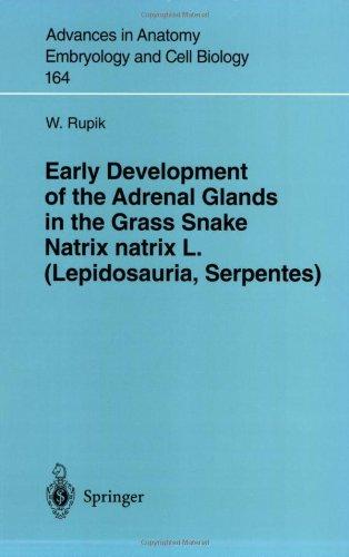 Early Development of the Adrenal Glands in Grass Snake Natrix Natrix L. (Lepidosauria, Serpentes) 9783540431657