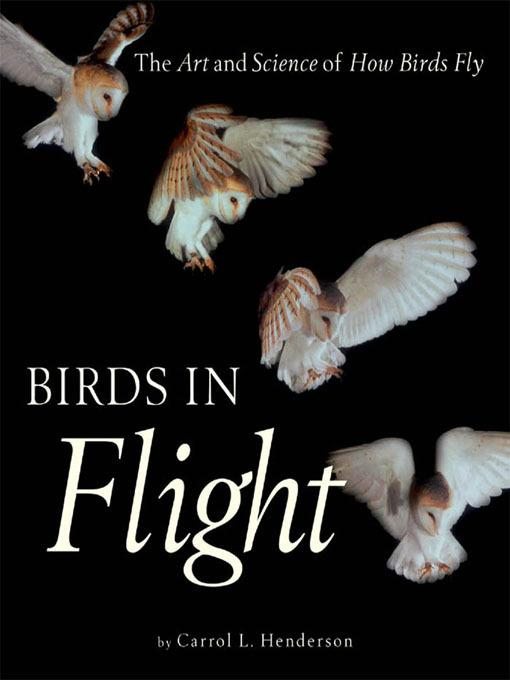 Birds in Flight EB2370003273007