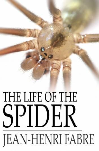 The Life of the Spider EB2370002798396