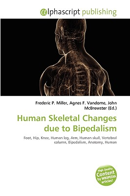 Human skeletal changes due to bipedalism