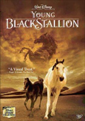 Young Black Stallion