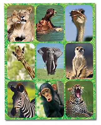 Kingdom of the Son Safari Snapshots Stickers