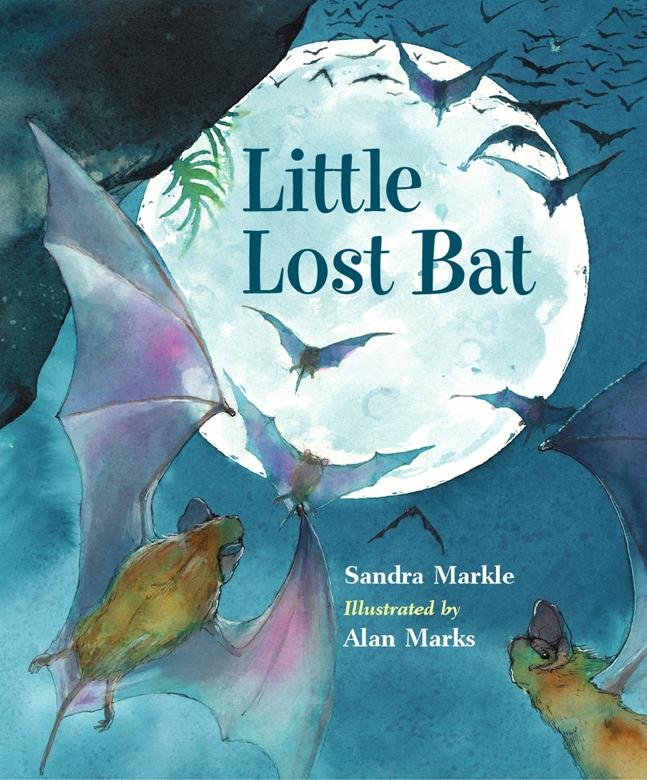 Little Lost Bat EB9781607340423
