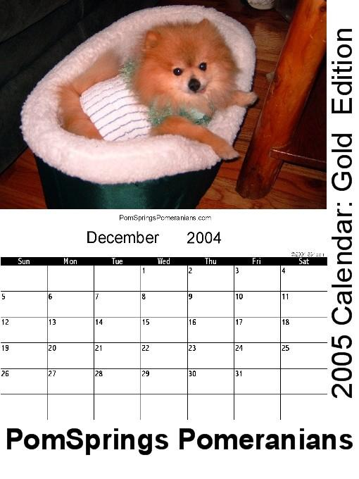 PomSprings Pomeranians 2005 Calendar: Gold Edition EB9781932572025